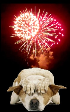 help your dog handle fireworks