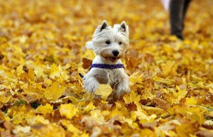 dogs-and-autumn